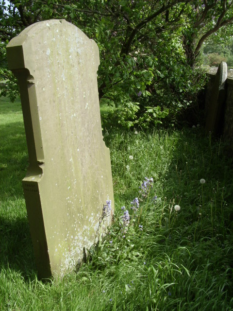 Bluebells resolute by a blank headstone? Inspiration for a song if I ever saw it.