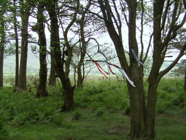 Tree ribbons, placed recently by modern day Pagans as prayers and offerings.