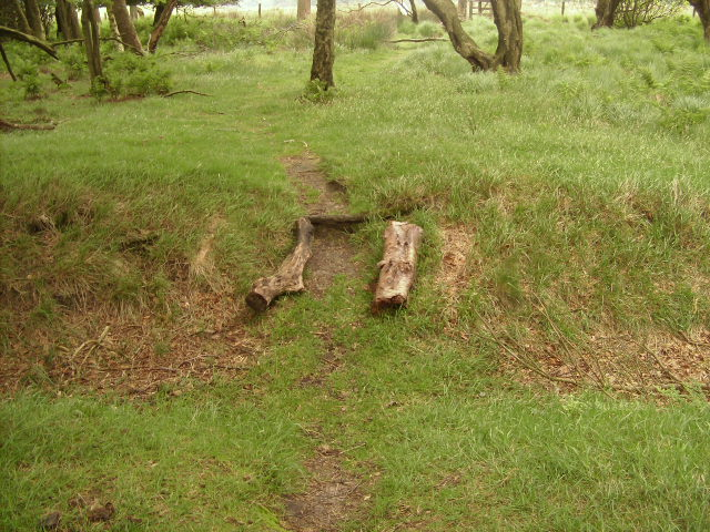 Logs placed to show the depth of the ditch.