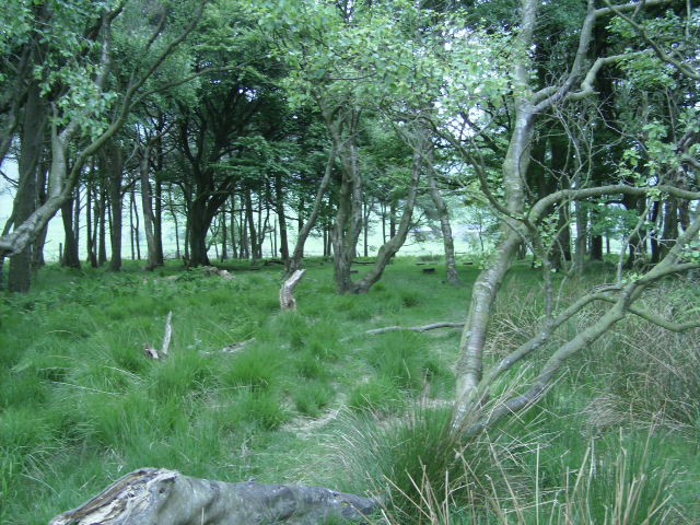 You can just about make out the traces of an ancient path amongst the ferns and bracken.